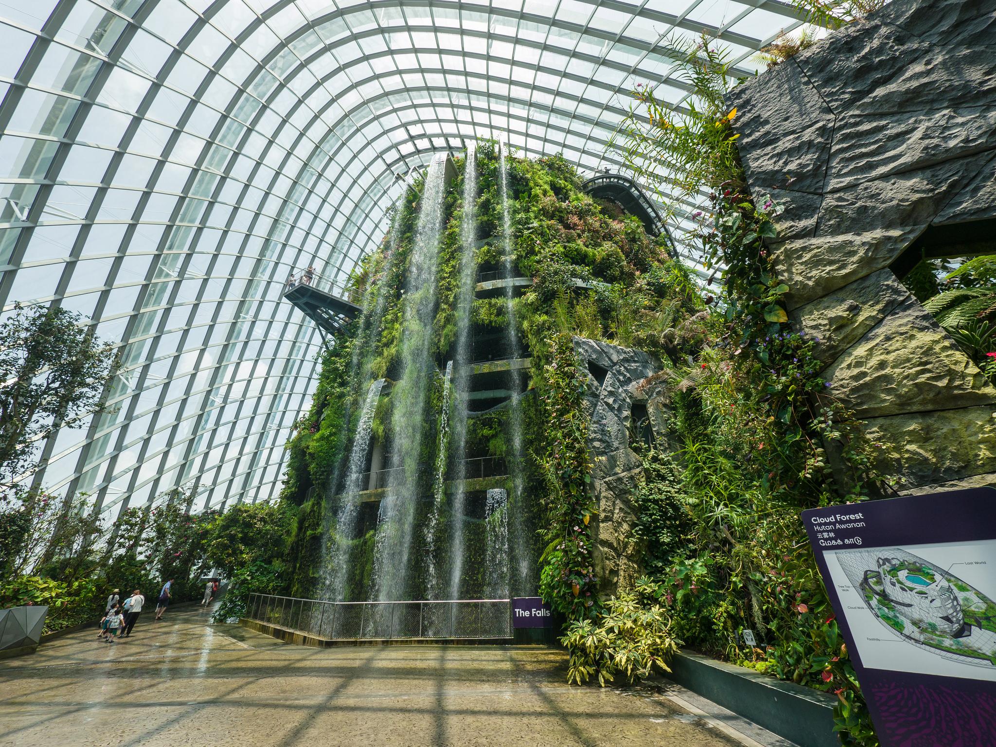 Kunjungi Orchid Display di Cloud Forest