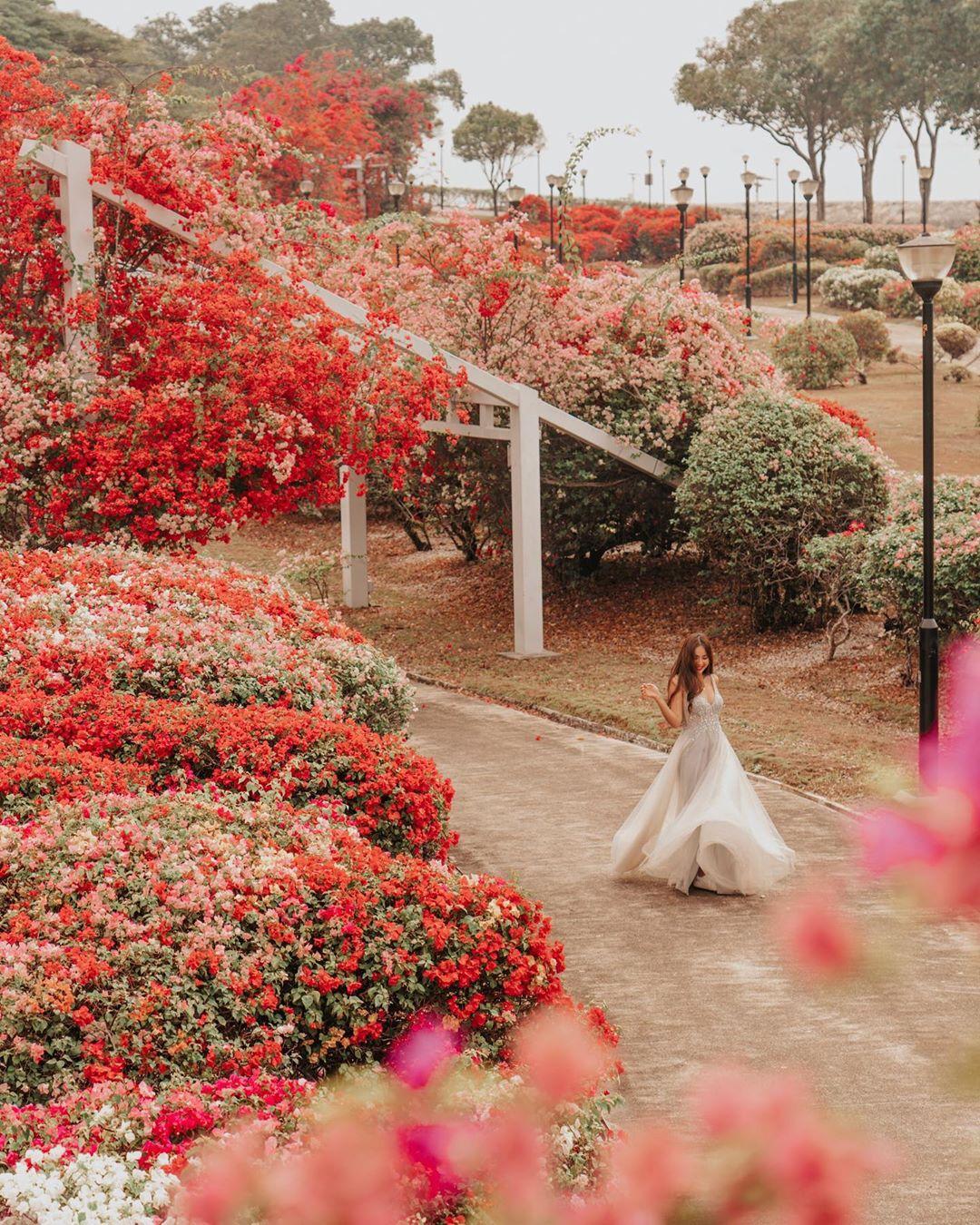 East Coast Bougainvillea Garden