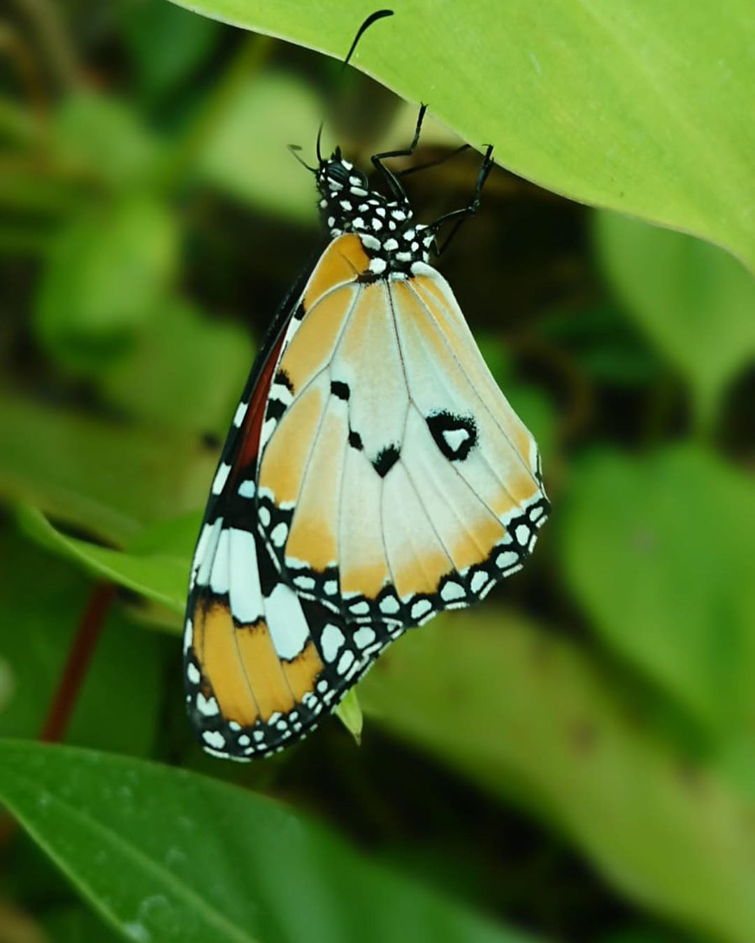 Butterfly Park Sentosa, Destinasi yang dilewati Cable Car Singapura