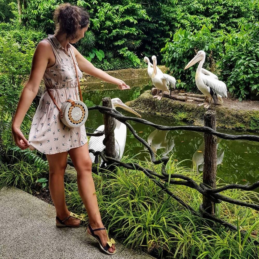Cara Adopsi Hewan di Kebun Binatang Singapura