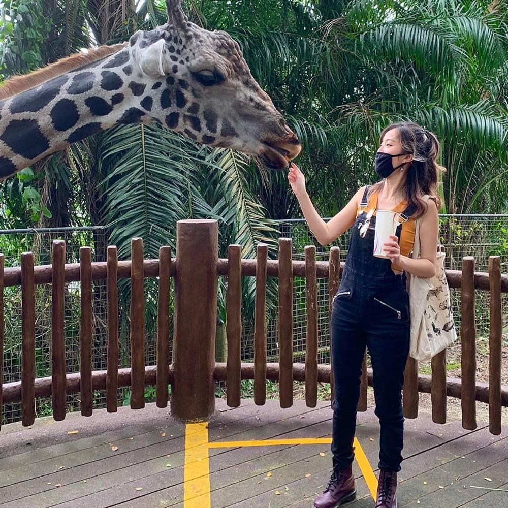 Memberi makan hewan di Singapore Zoo. Instagram @annettelee