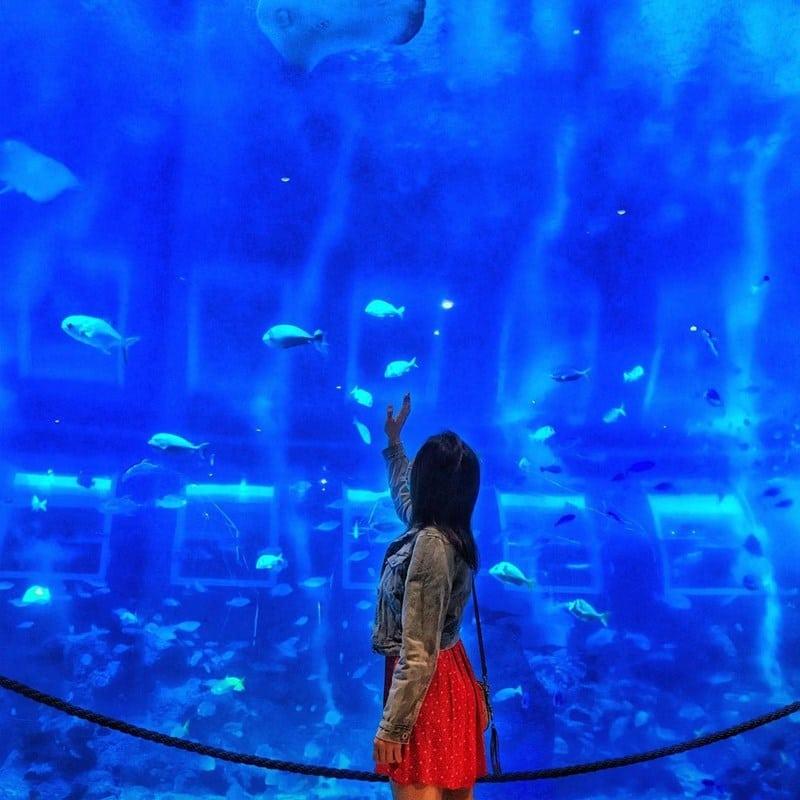 S.E.A. Aquarium. Instagram @instalady