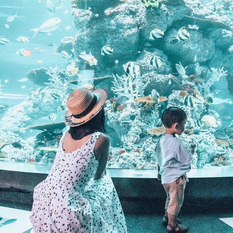 Wisata di S.E.A Aquarium. Instagram @themerriedlife
