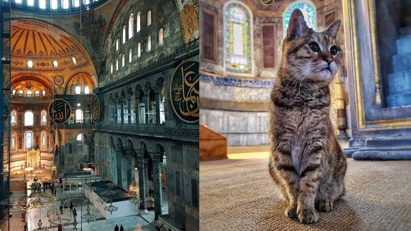FI Kucing di Hagia Sophia. Instagram @yashastliwa @laitha_moment