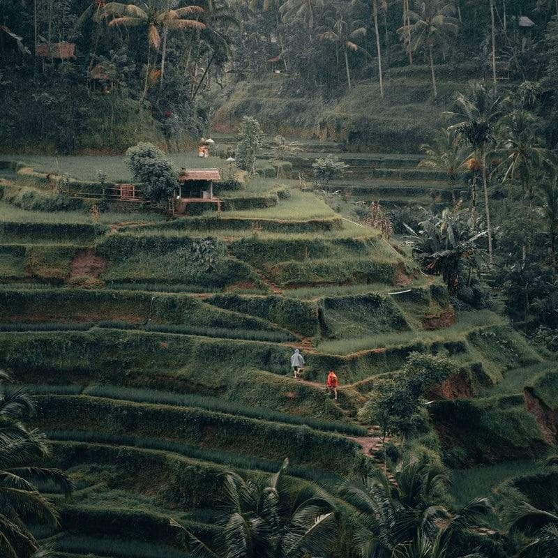 Ilustrasi sawah indah di Bali. Photo by Radoslav Bali on Unsplash
