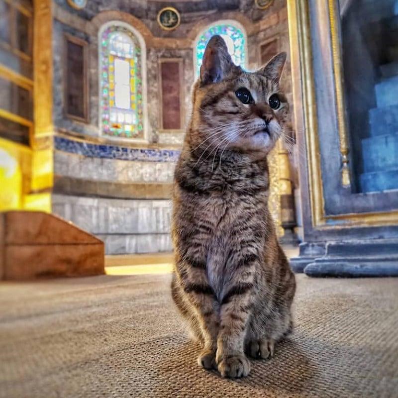 Kucing di Hagia Sophia. Instagram @yashastliwa