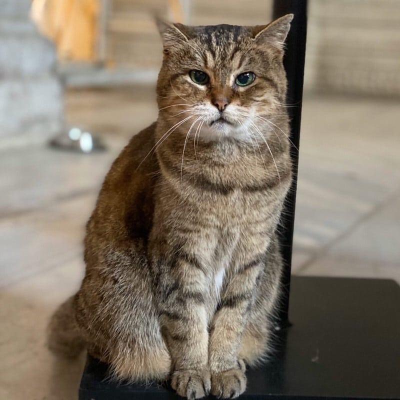 Good Bye Kucing Di Masjid Hagia Sophia Turki Sang Legendaris Sgbsgb