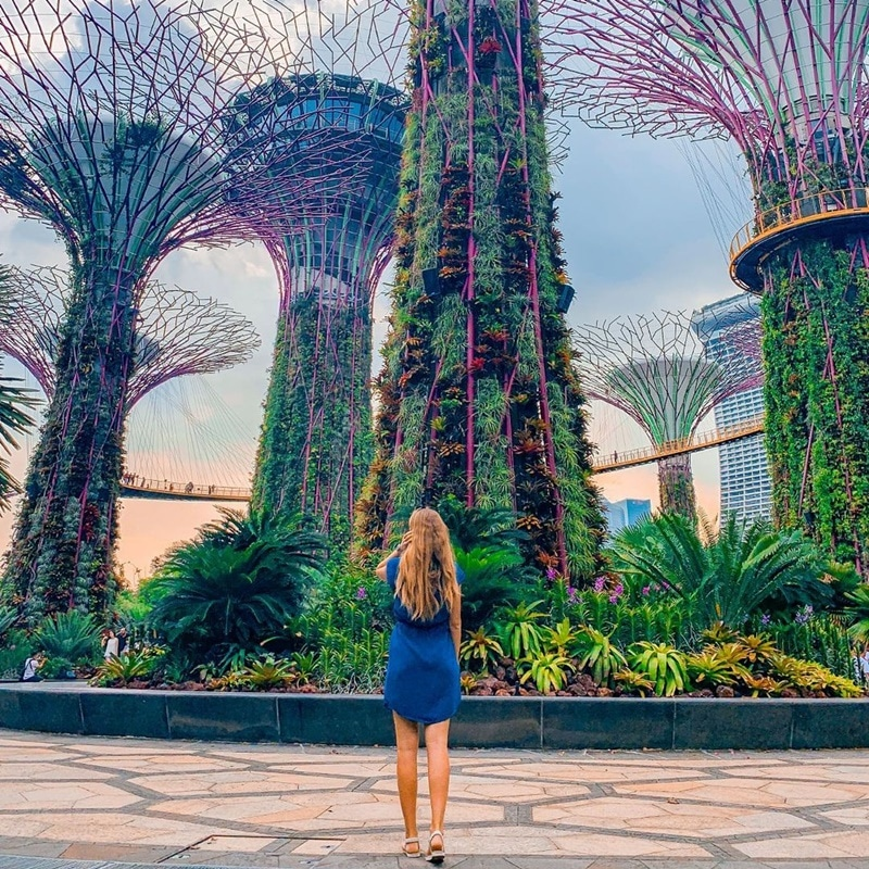 Supertree Grove Gardens by the Bay. Instagram @flying_scout