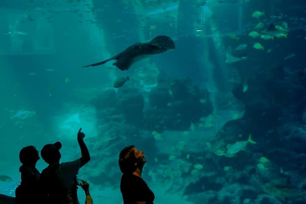 Ilustrasi S.E.A. Aquarium di Pulau Sentosa. Photo by Unsplash Wina Tristiana